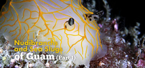 Video: Nudibranchs and Sea slugs of Guam part one Photo