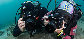 Coming soon: Nikon vs Canon Underwater Shootout Photo