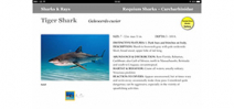 New World releases iBook version of Caribbean Reef Fish ID Photo
