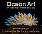 Ocean Art competition winners announced Photo