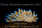 Call for entries: Ocean Art Underwater photo competition Photo