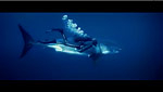 Oceans, a new Disney movie for Earth Day 2010 Photo