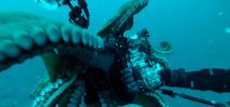 Video: Octopus snags camera rig (almost) Photo