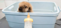 Help the Shedd Aquarium name their famous sea otter pup Photo