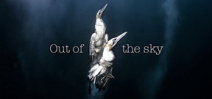 Video: Out of the Sky by Behind the Mask Photo