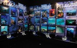 Call for entries: Pelagos International Sea Festival Photo