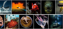 Winners of the 2018 Scuba Diving magazine photo contest have been announced Photo