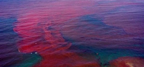 Enormous red tide off Northwest Florida Photo