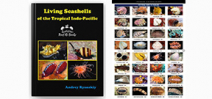 Reef ID Guide to Indo-Pacific Seashells released Photo