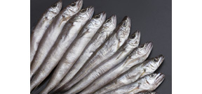 West coast sardine population collapses prompting fishing ban Photo