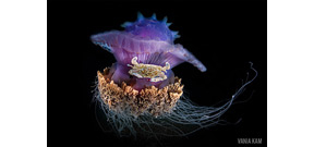 Scuba diving magazine's photo contest winners announced Photo