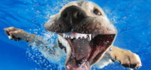 Seth Casteel releases underwater puppies book Photo