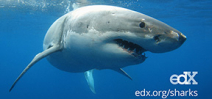Free Online Shark Course returns Photo
