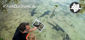 Book: Shark Doc, Shark Lab Photo