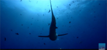 Borneo From Below: Shark Special Photo