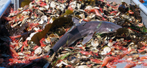 Report suggests oceans are entering a phase of extinction Photo