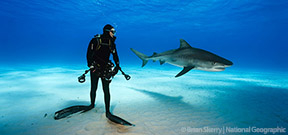 National Geographic launches its Summer of Sharks Photo