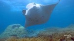 The Secret World of Mantas and Mobulas Photo