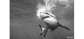 Scuba Diving shares 16 shark image submissions for shark week Photo