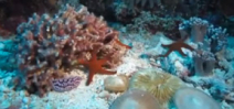 Coral reefs come to life in underwater time lapse video Photo