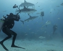 Video: Bahamas Underwater Photo Week by Cristian Dimitrius Photo