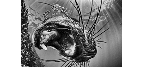 Underwaterphotography.com 2016 winners Photo