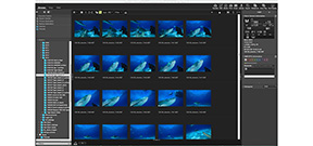 Nikon releases ViewNX-i software Photo