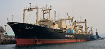 Japan to resume Southern Ocean whaling Photo