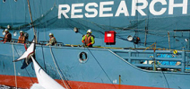 Japan in the dock: Australia and New Zealand go to court over whaling Photo