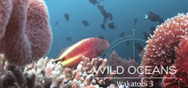 Video: Wakatobi Part 3 by Earth Touch Photo