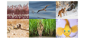 WPOTY18: Highly Commended images preview Photo