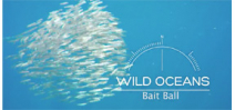 Earth Touch: Bait Balls Photo