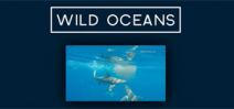 Video: Earth Touch Wild Oceans Photo