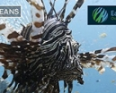 Video: Lionfish footage on Wild Oceans Photo