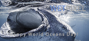Happy World Oceans Day 2015 Photo