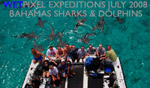 Wetpixel Sharks & Dolphins 2008 expedition a success Photo