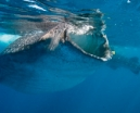 Trips: Wetpixel Whale Sharks 2019 Photo