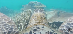 Video: A turtle eye view of the Great Barrier Reef Photo