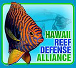 Sign petitions to protect reefs in Hawaii, protest slaughter of whales Photo