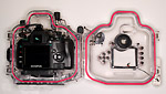 Olympus E-410 dSLR and PT-E03 underwater housing Photo