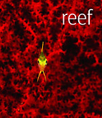 Review of Reef by Scubazoo Photo