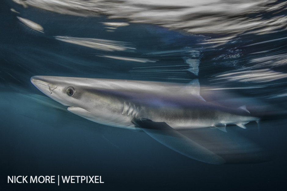 Blue Shark Blur. Cornwall, UK. Settings: f/22 1/8th ISO 125. Accelerated Panning with Front Curtain Sync. Awarded: Runner up,  Underwater Photographer of the Year (UPY) 2017.