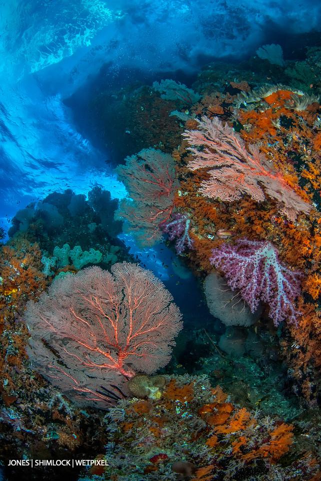 """2010: """"Warna Berwarna"""", Raja Ampat, Daram Islands, West Papau, Indonesia"""