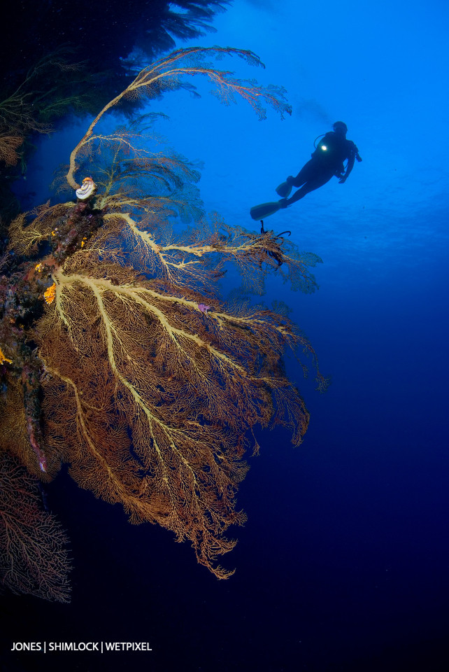 Late 80's (film): Marovo Lagoon, Solomon Islands.  In many areas the reef walls of the Solomon Islands are covered in a profusion of sea fans.