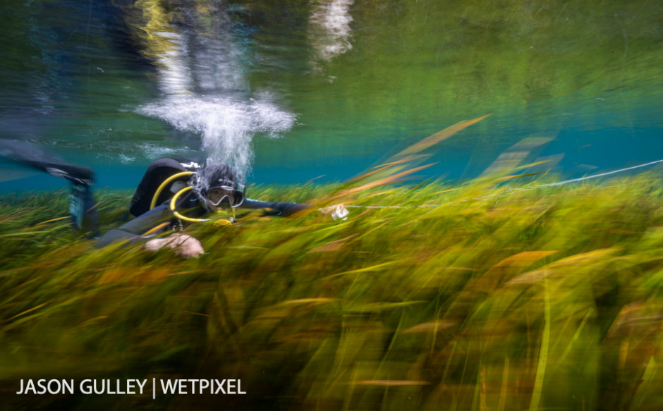 Rapid water flow whisks a diver through thickets of eelgrass in Florida's Rainbow River. Eelgrass is the foundation of a healthy spring ecosystem.