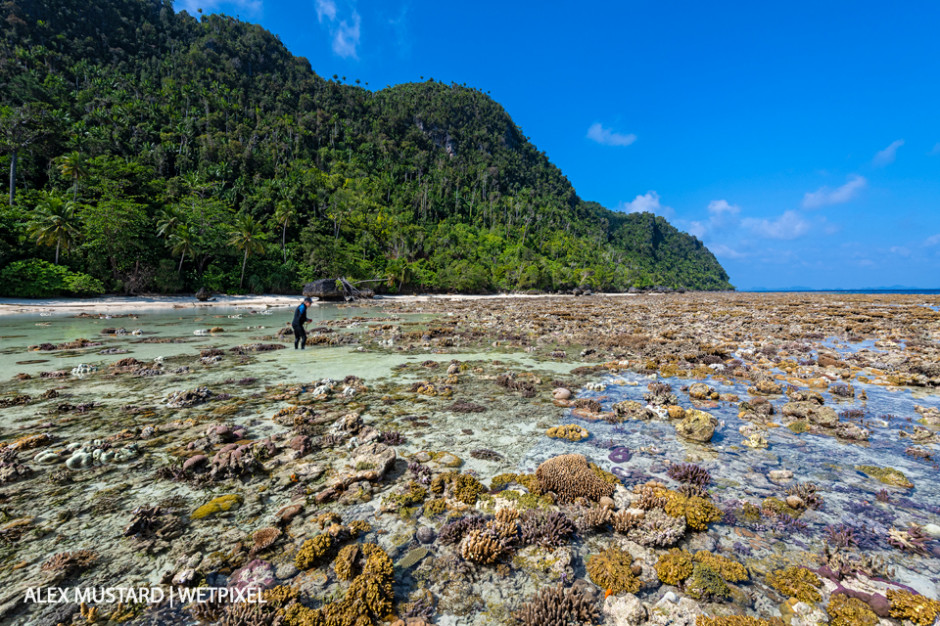 Hard coral reef exposed by a low spring tide in front of an island with a man (Bernd Meier) exploring. Yillet Island, Misool.