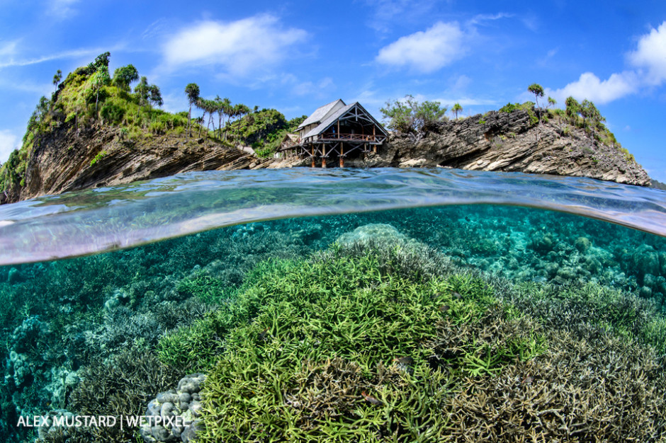 A split-level image of a hard coral garden flourishing in the shallow water below Misool Eco Resort. Misool