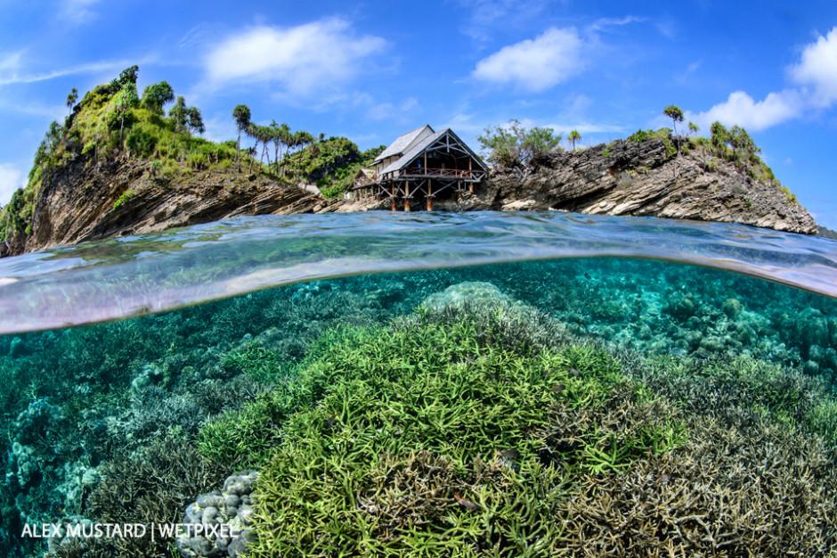 A split-level image of a hard coral garden flourishing in the shallow water below Misool Eco Resort. Misool