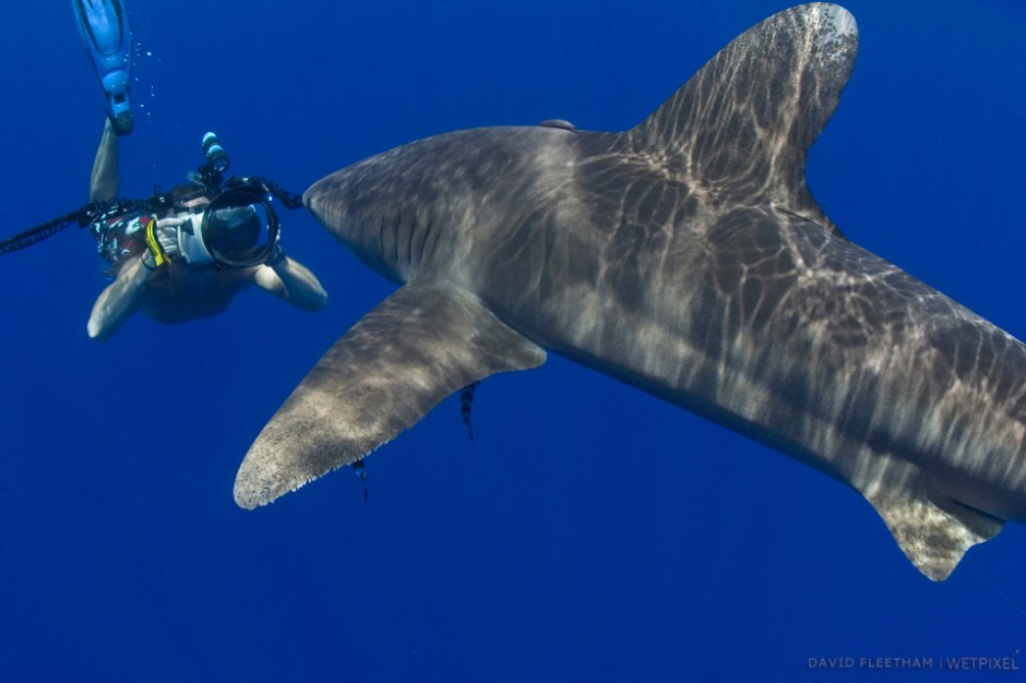 Photographer (MR) and an oceanic whitetip shark, Carcharhinus longimanus, Hawaii.
