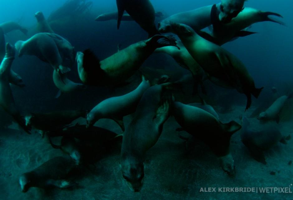 Sea lion colony, Santa Barbara Island, Channel Islands National Park, California.